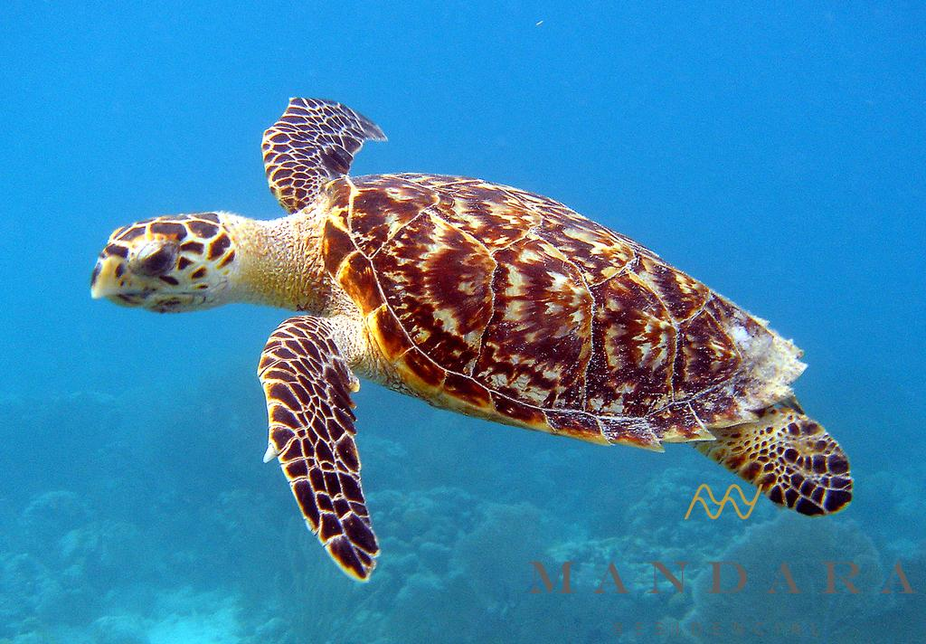 Las tortugas en peligro de extinción