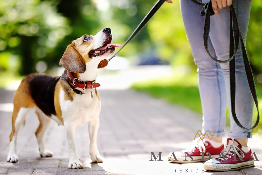 Beneficios de pasear a mi mascota