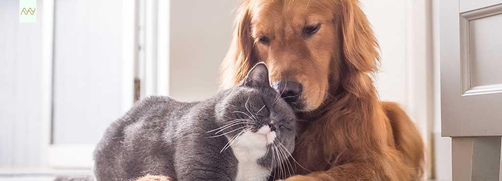 ¿Pueden coexistir el orden y tu perro?