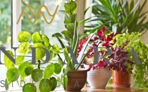 Beneficios de tener plantas en mi patrimonio